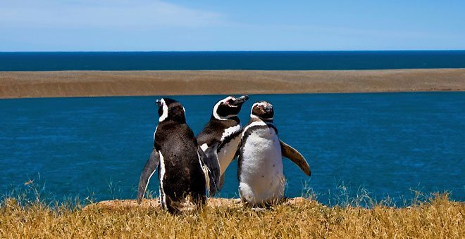 South America Shore Excursions
