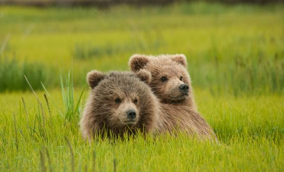 Icy Strait Cruise Excursions | Bear, Wilderness & Wildlife Search