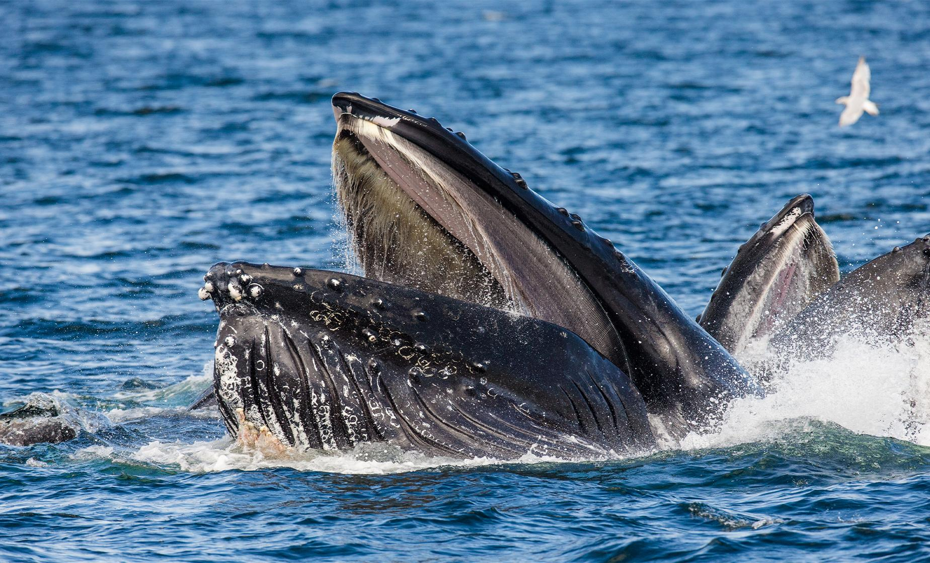 Icy Strait Cruise Excursions | Whale Watching