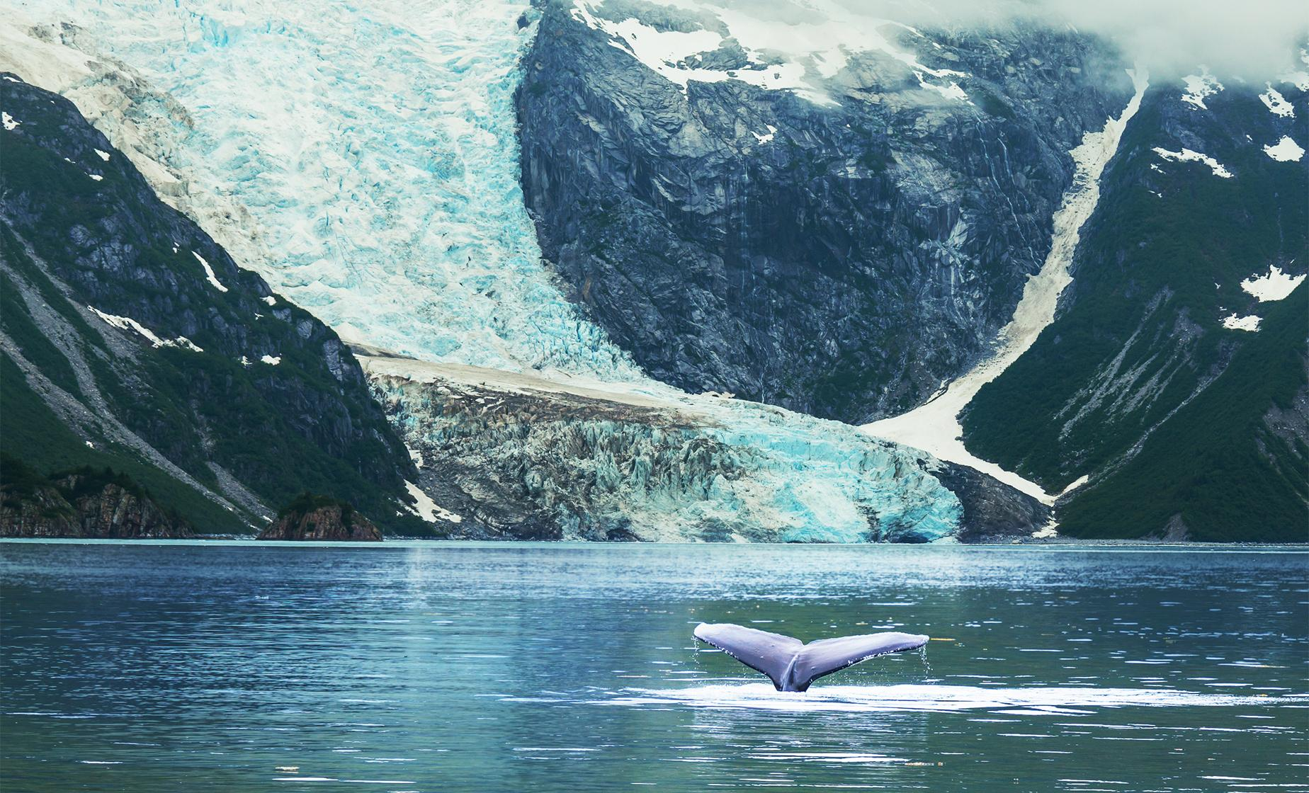 Whales and Mendenhall Glacier