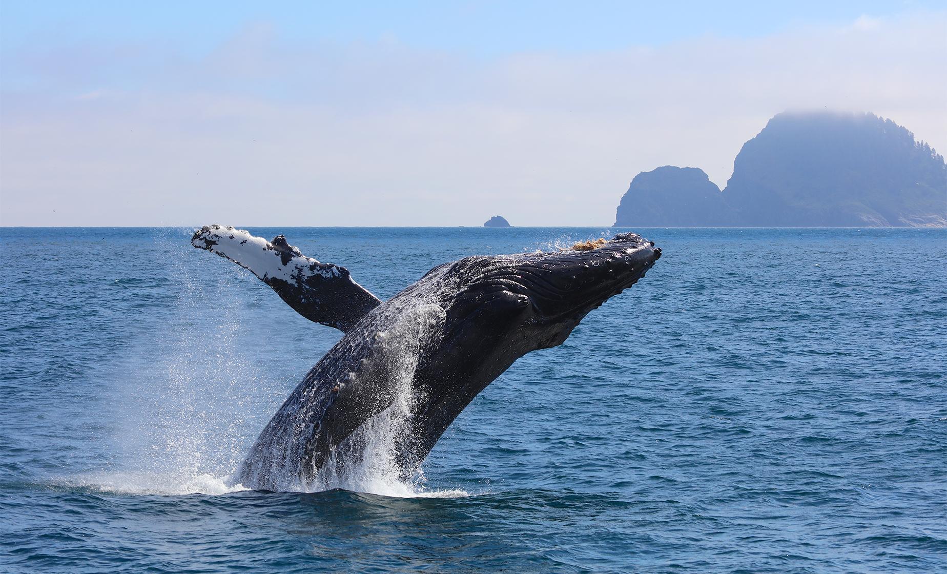 Whale Watch and Salmon Hatchery