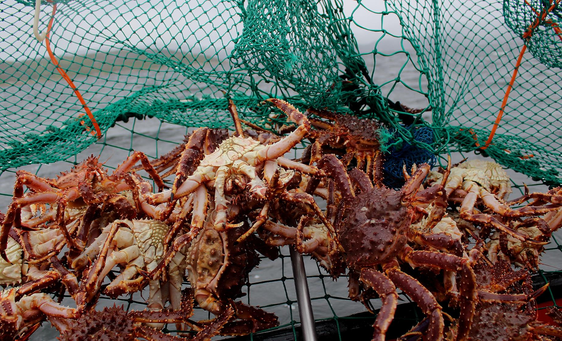 Bering Sea Crab Fisherman's Tour