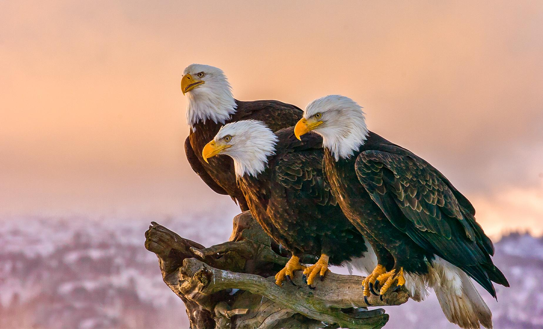 Wildlife & Eagle Watching Day Tour in Ketchikan, Alaska