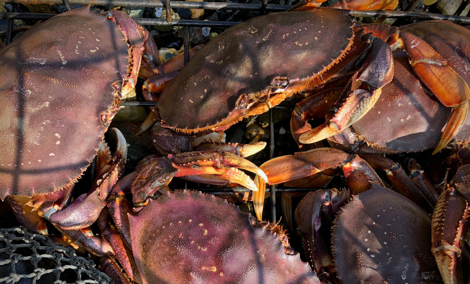 Private Alaskan Crabbing and Dining