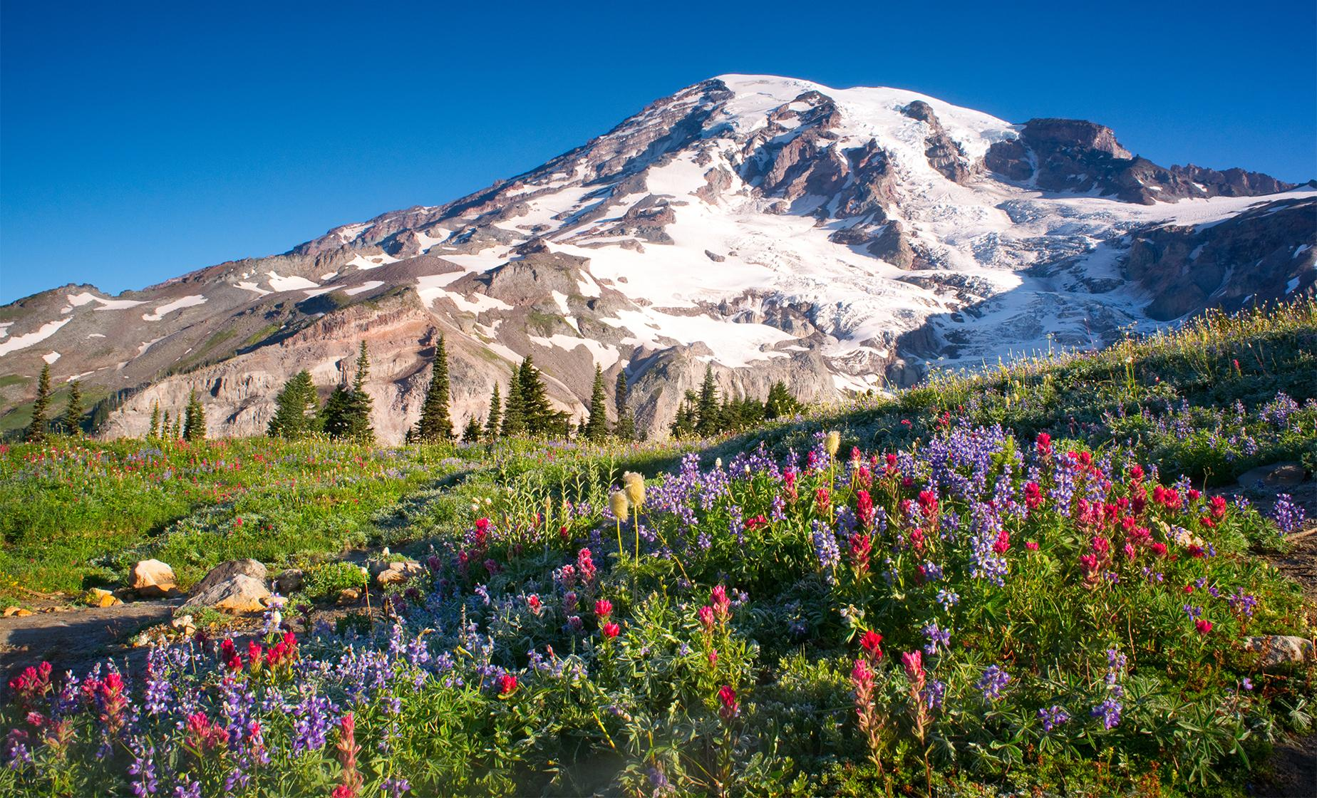 Mount Rainier National Park Tour in Seattle (Narada Falls, Glacial Moraines)
