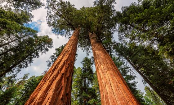 California Redwoods, Muir Woods & Sausalito Tour in San Fransisco