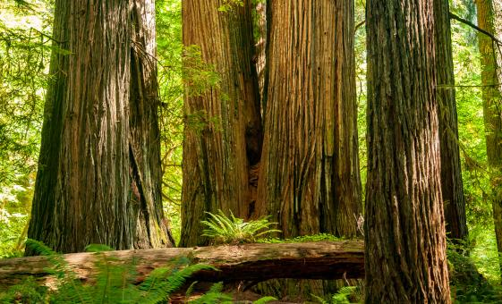 Giant Redwoods and San Francisco Bay Cruise (Muir Woods, Vista Point)