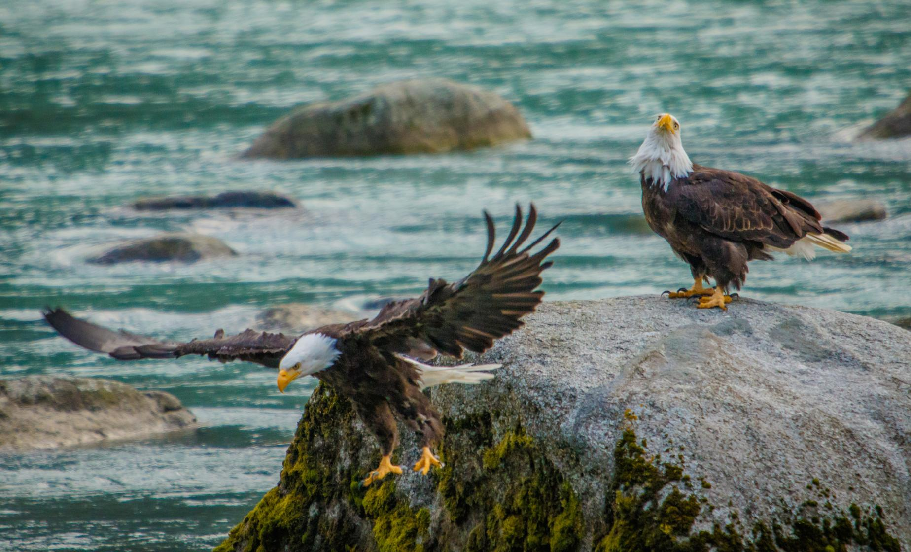 Chilkat Bald Eagle Preserve Rafting from Skagway