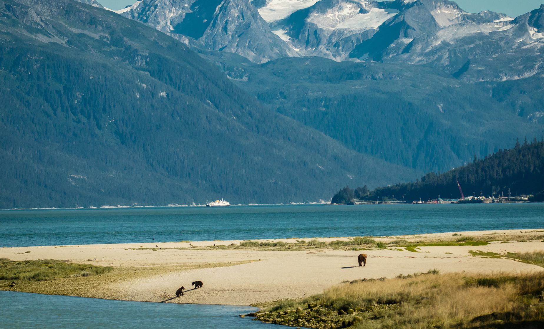 Wildlife & Wilderness Excursion in Haines from Skagway, Alaska