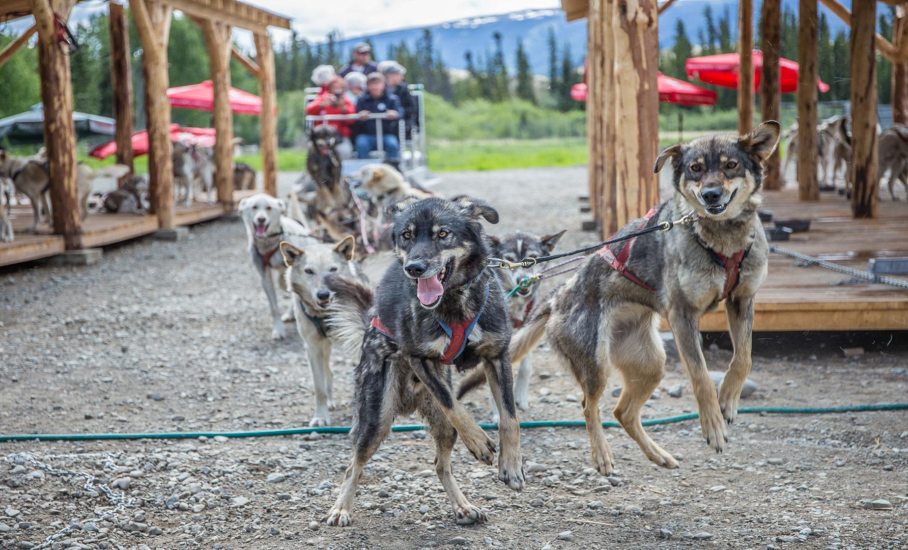 Caribou Crossing Dog Mushing Camp Shore Trip from Skagway | Yukon Quest