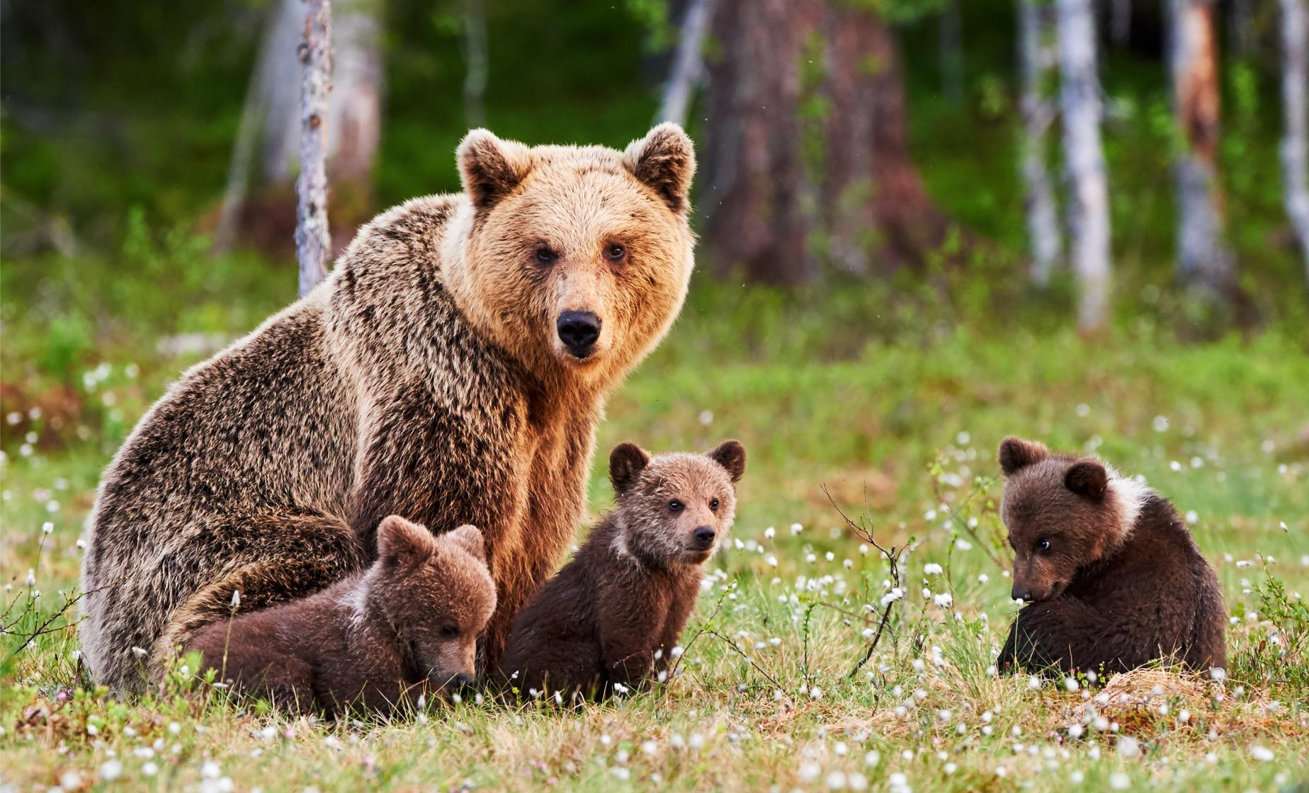 Wildlife Safari and Bear Viewing - Haines