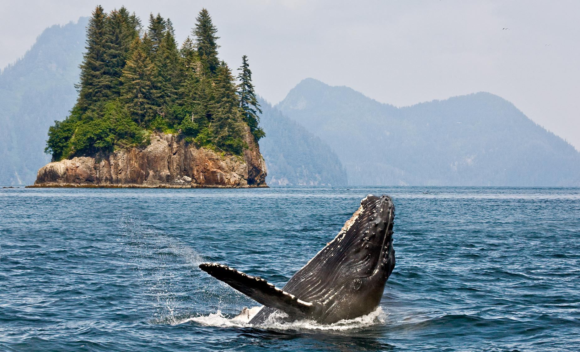 Whale Watching and Marine Wildlife