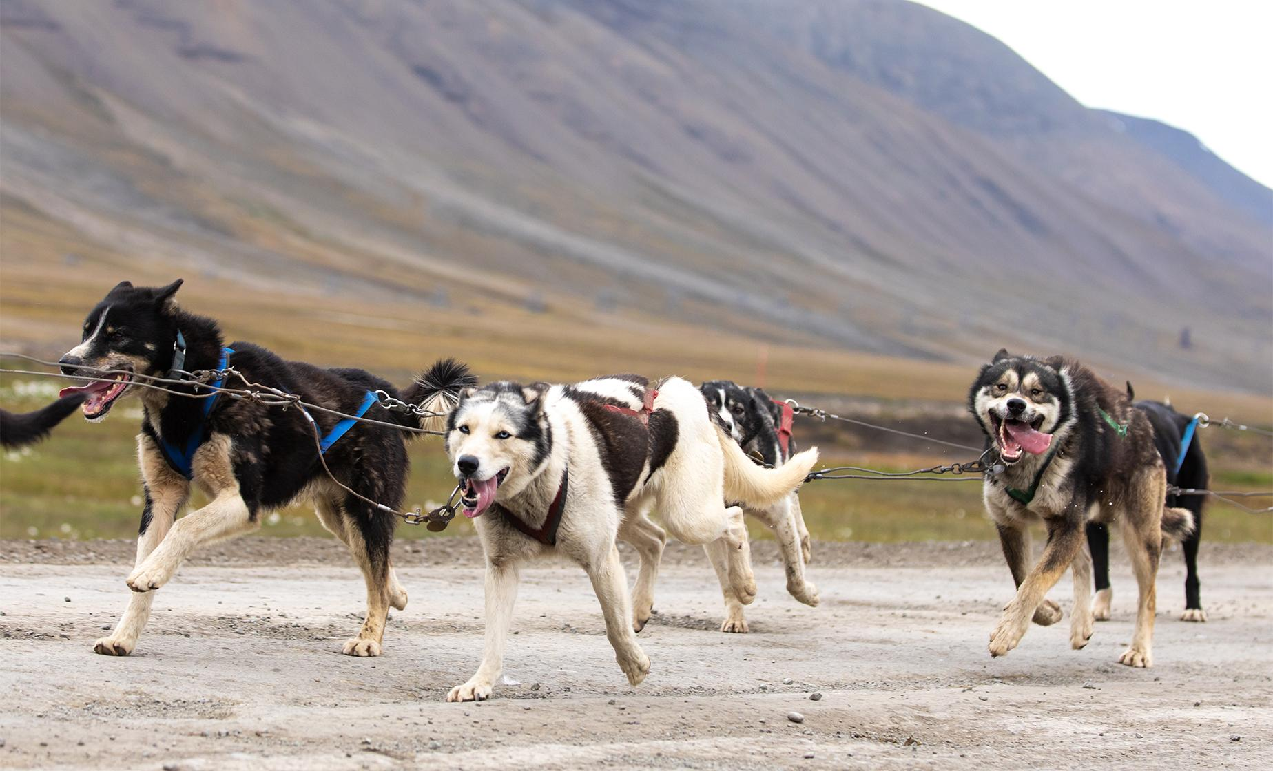 Wilderness Dog Sled Tour