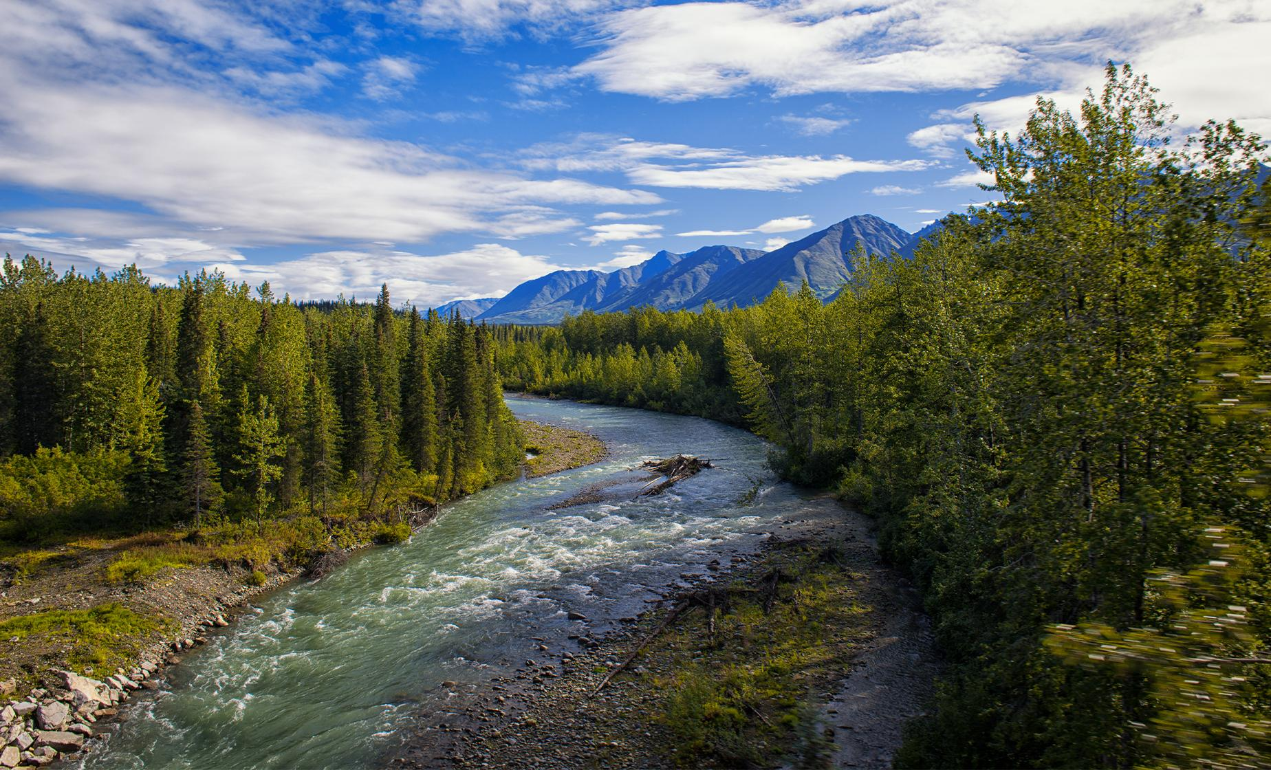 Talkeetna Cruise Excursions | Chulitna Gorge River Tour