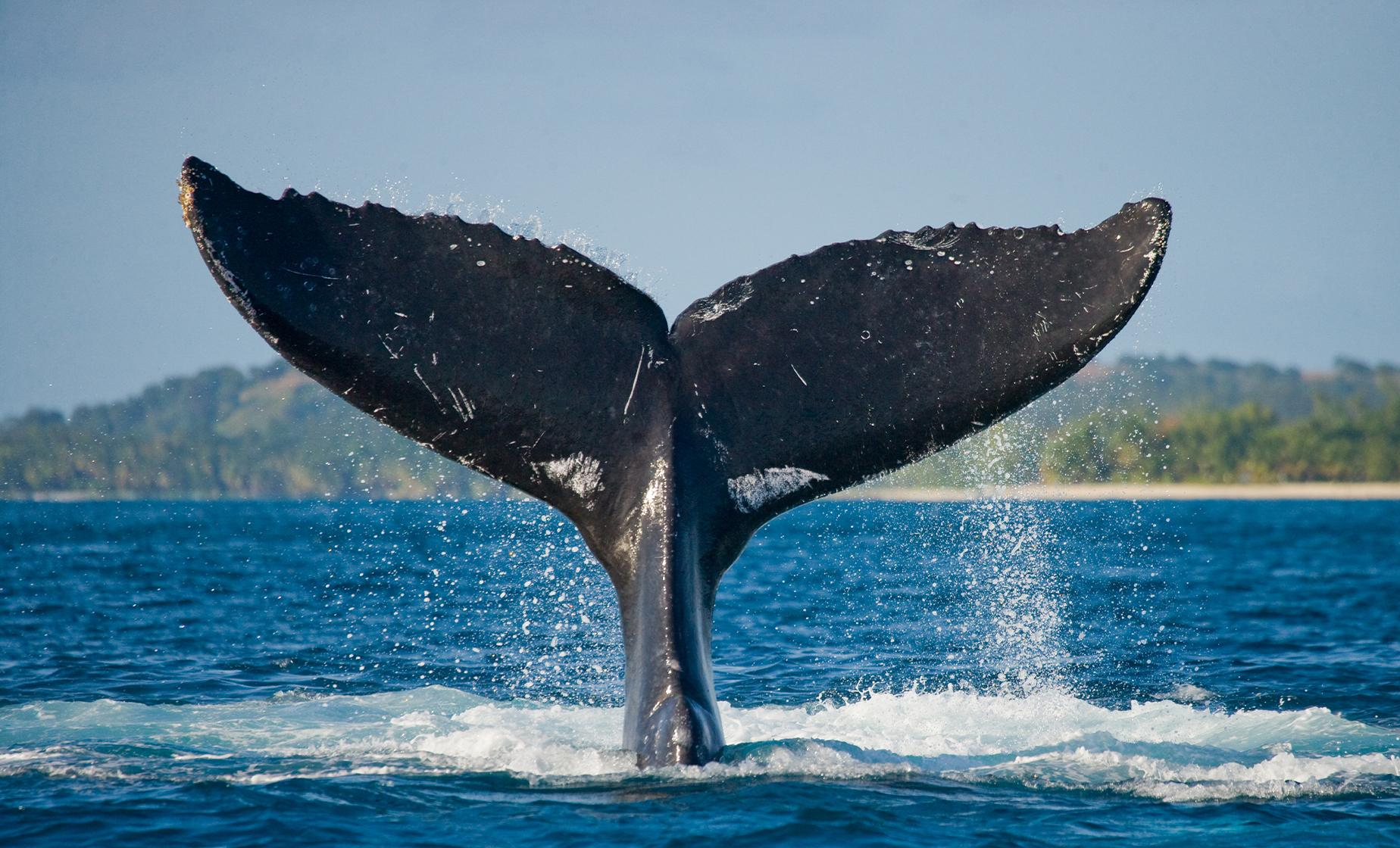 Victoria Whale Watching Tour