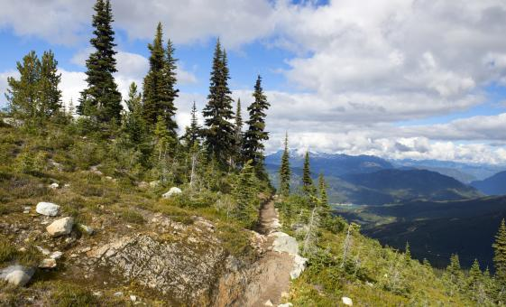 Whistler Mountains and Adventure Tour in Vancouver (Cheakamus River, Shannon Falls)