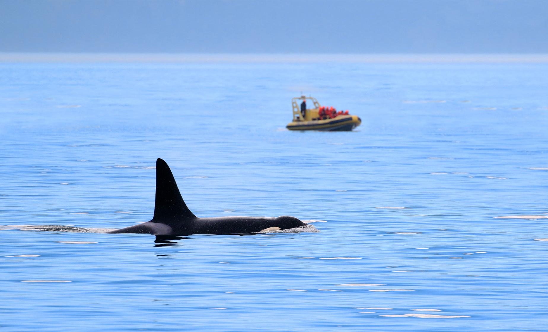 Victoria Whale Watch Safari and Sea Plane Return Pre Cruise Hotel