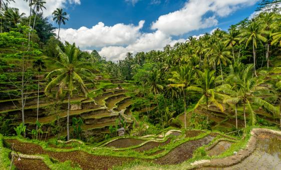 Private Ubud Exploration for a Day