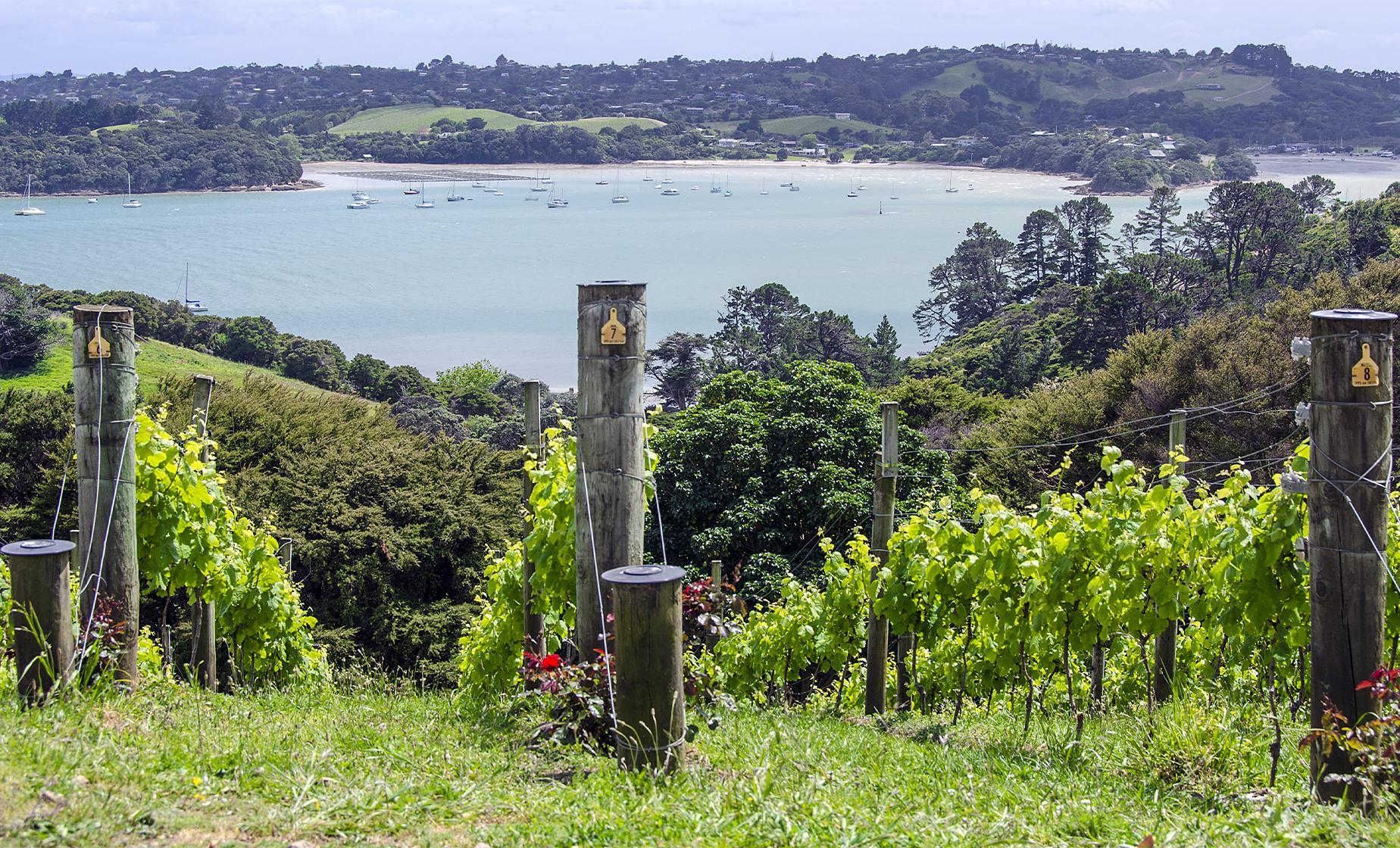 Waiheke Island and Winery Tour from Auckland (Rangihoua Estate, Auckland Harbor)