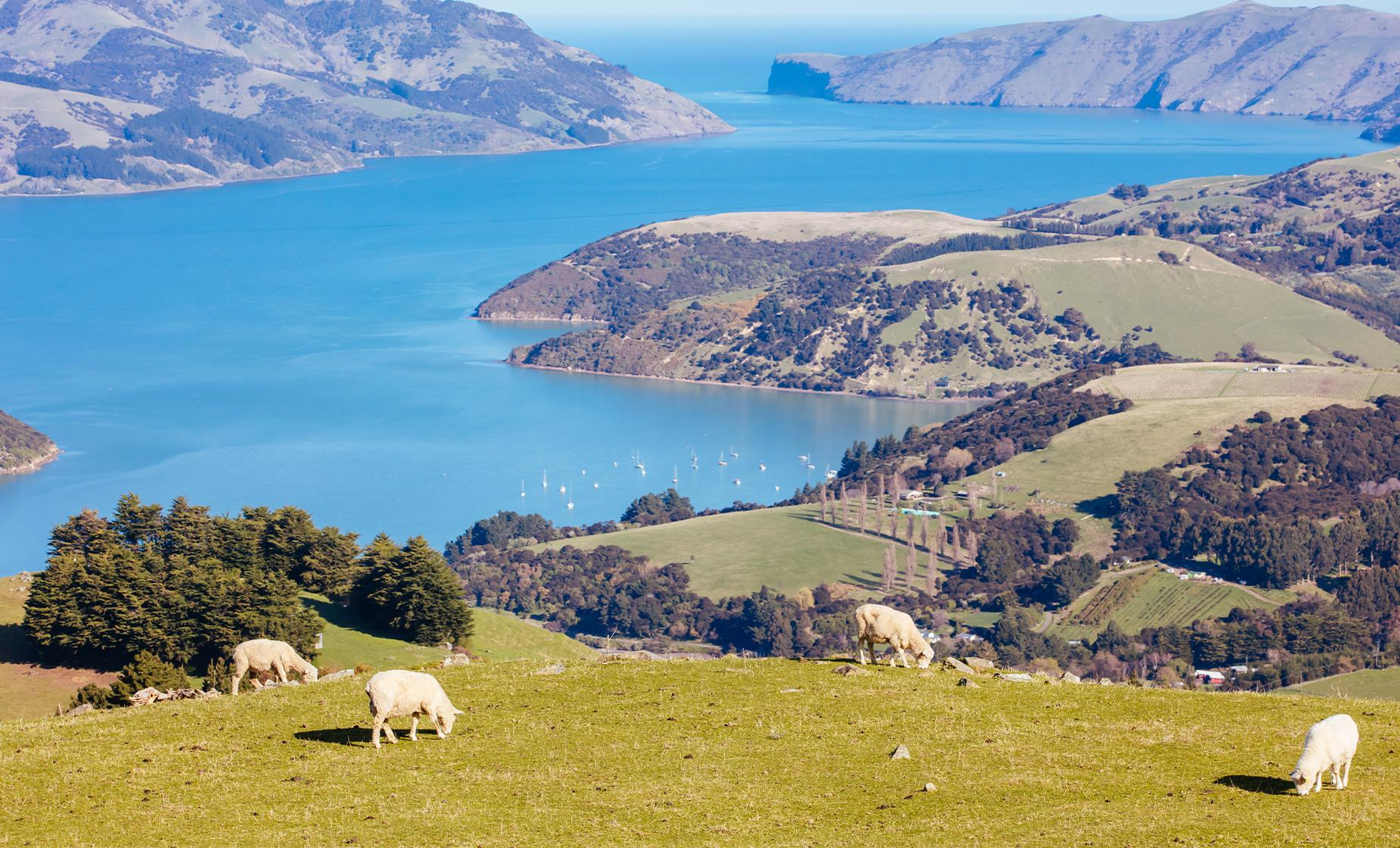 Banks Peninsula, Christchurch, and Willowbank Wildlife Reserve