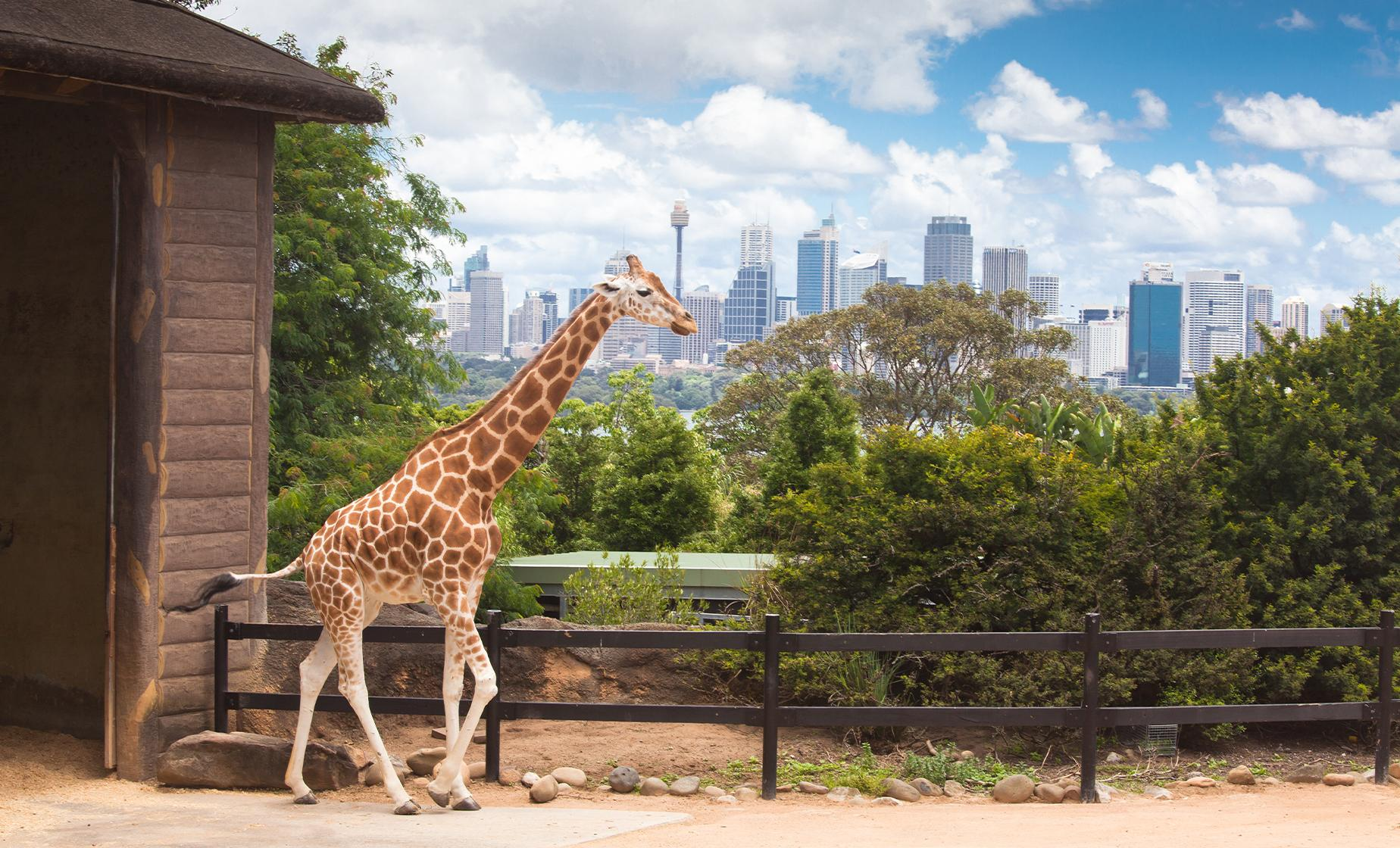 Sunshine Coast Australia Zoo Tour from Brisbane (Glasshouse Mountains)