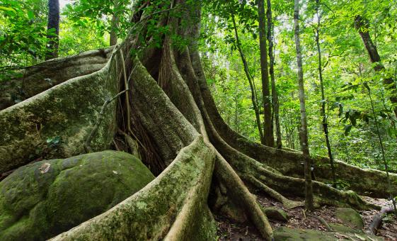 Cairns Australia Rainforest