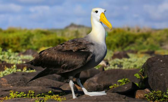 Albatross Wildlife and Harbour Cruise, Beaches and Wetlands