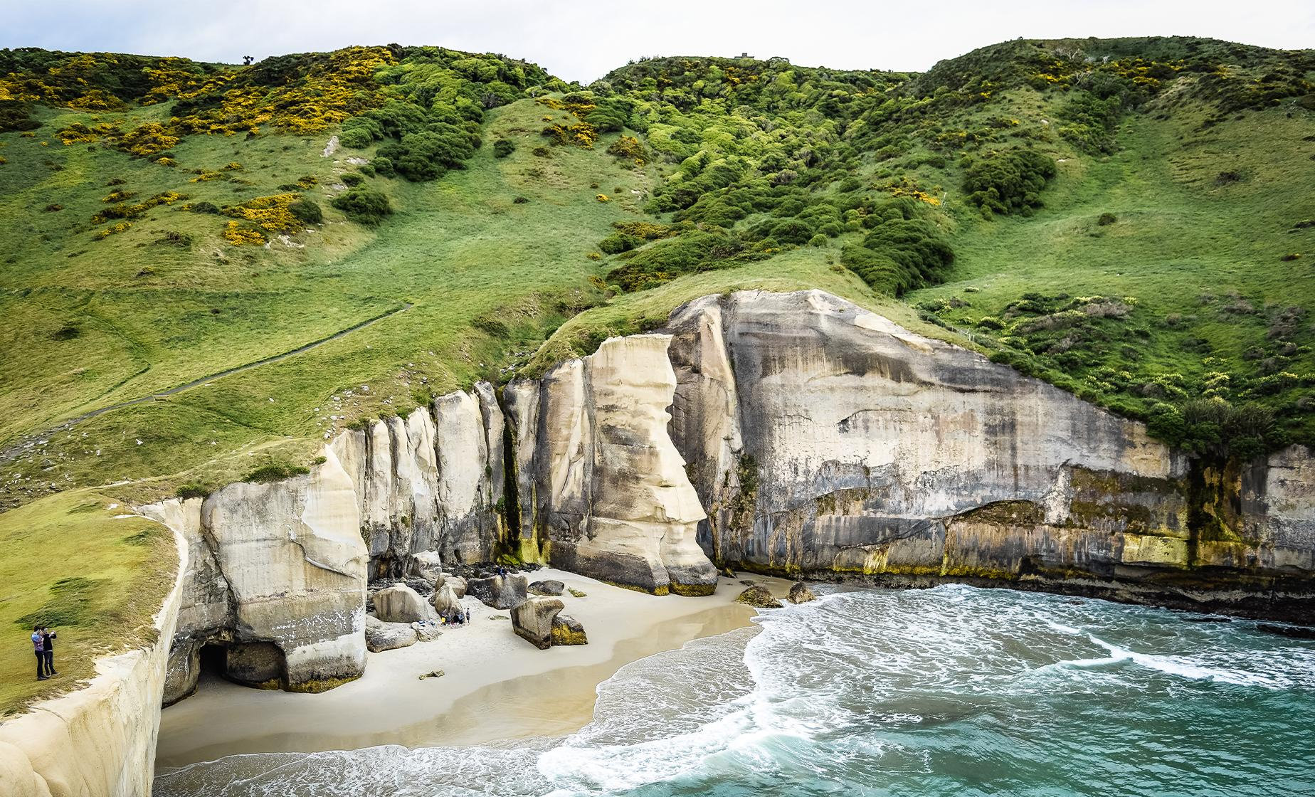 Bays Beaches and Views of Dunedin Tour (Otago Peninsula, Cape Saunders)