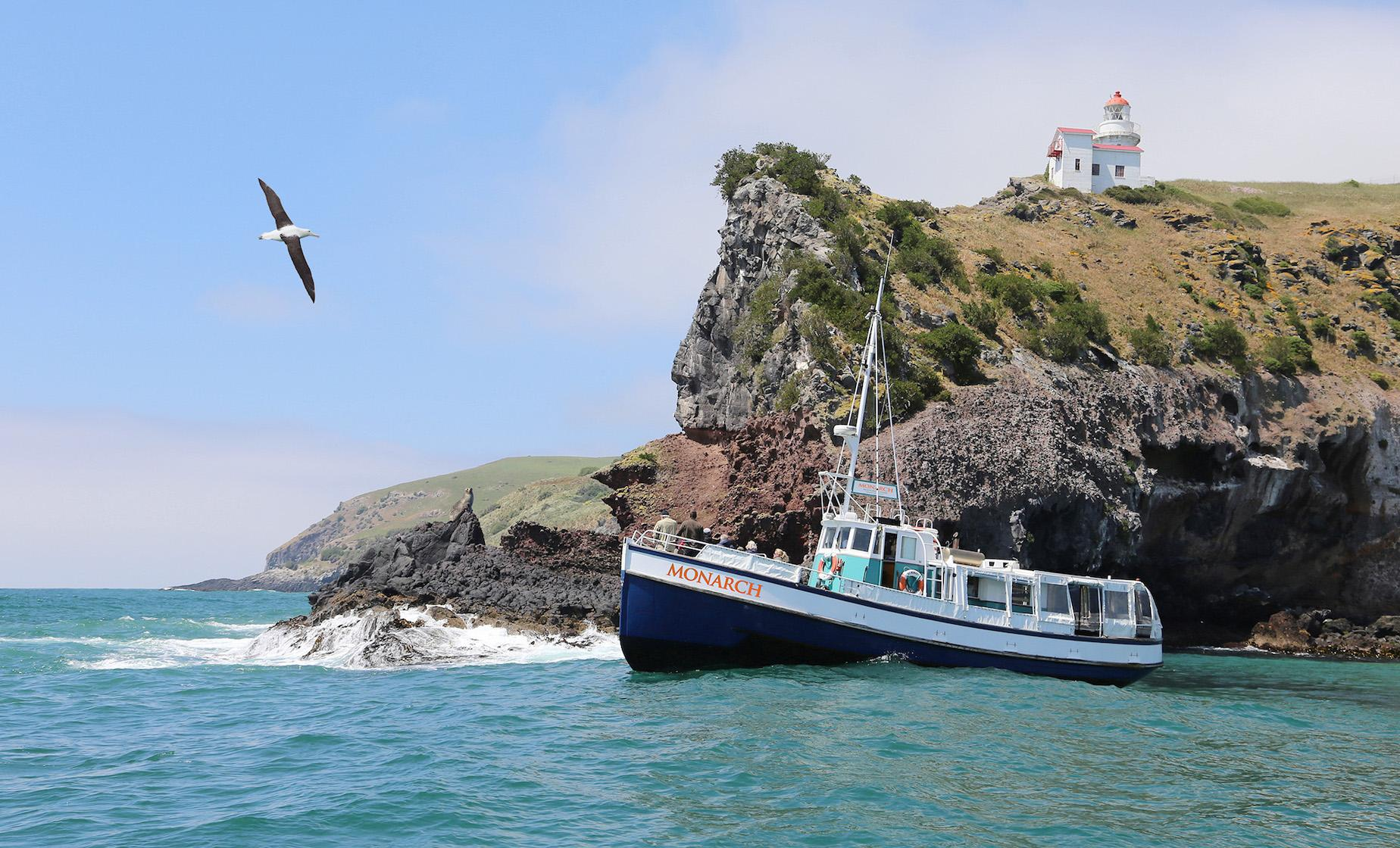 Otago Wildlife Cruise, Penguin Reserve & Dunedin Highlights