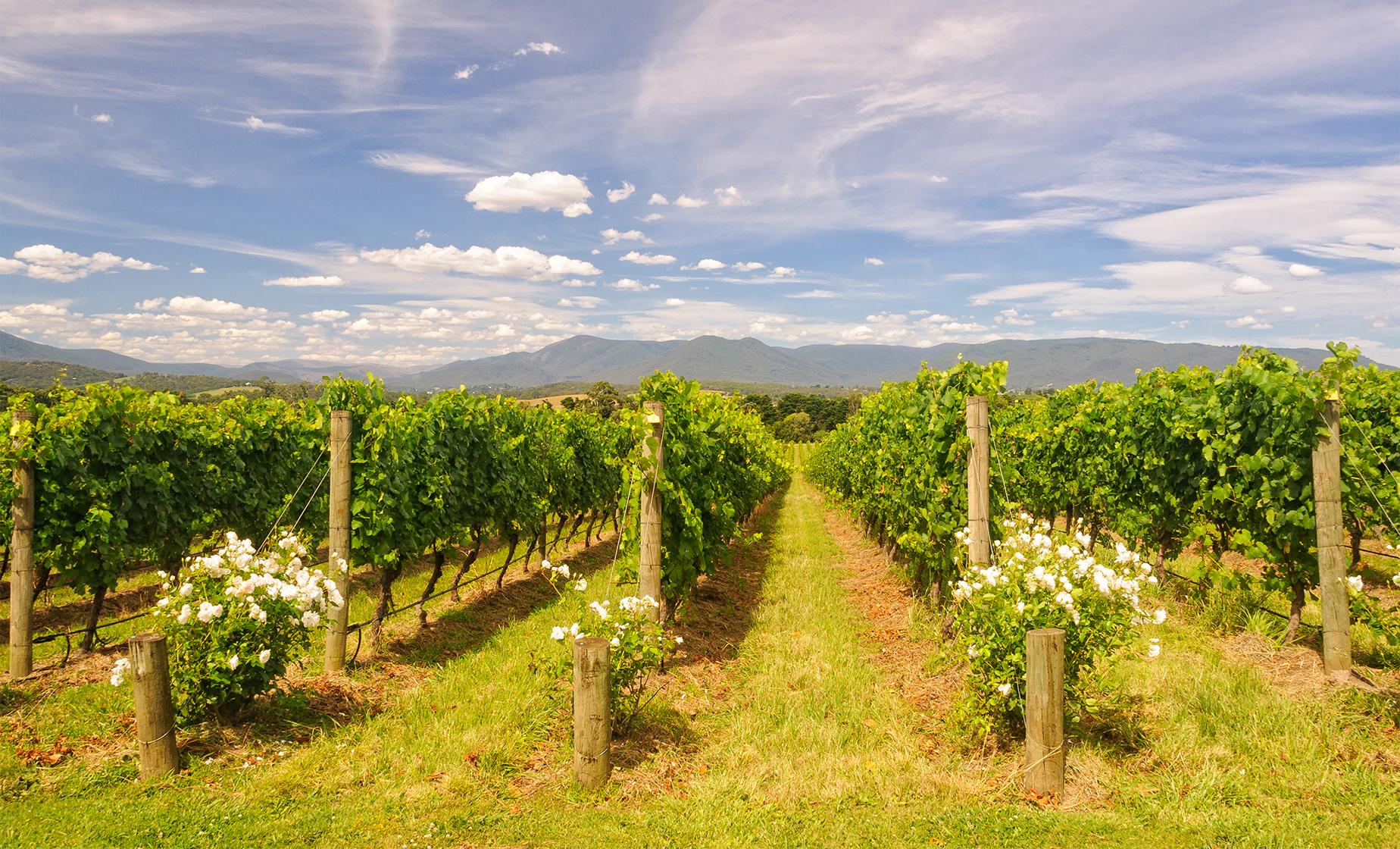 Private Upper Yarra Valley Experience