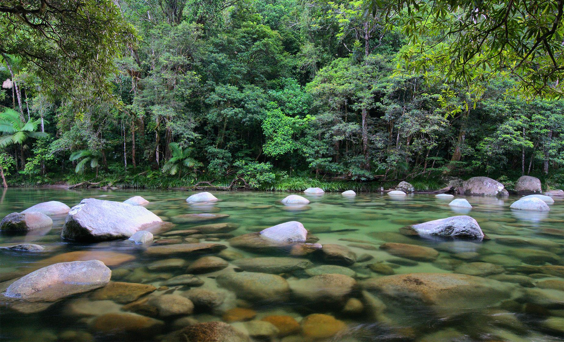 Private Mossman Gorge Rainforest Walk