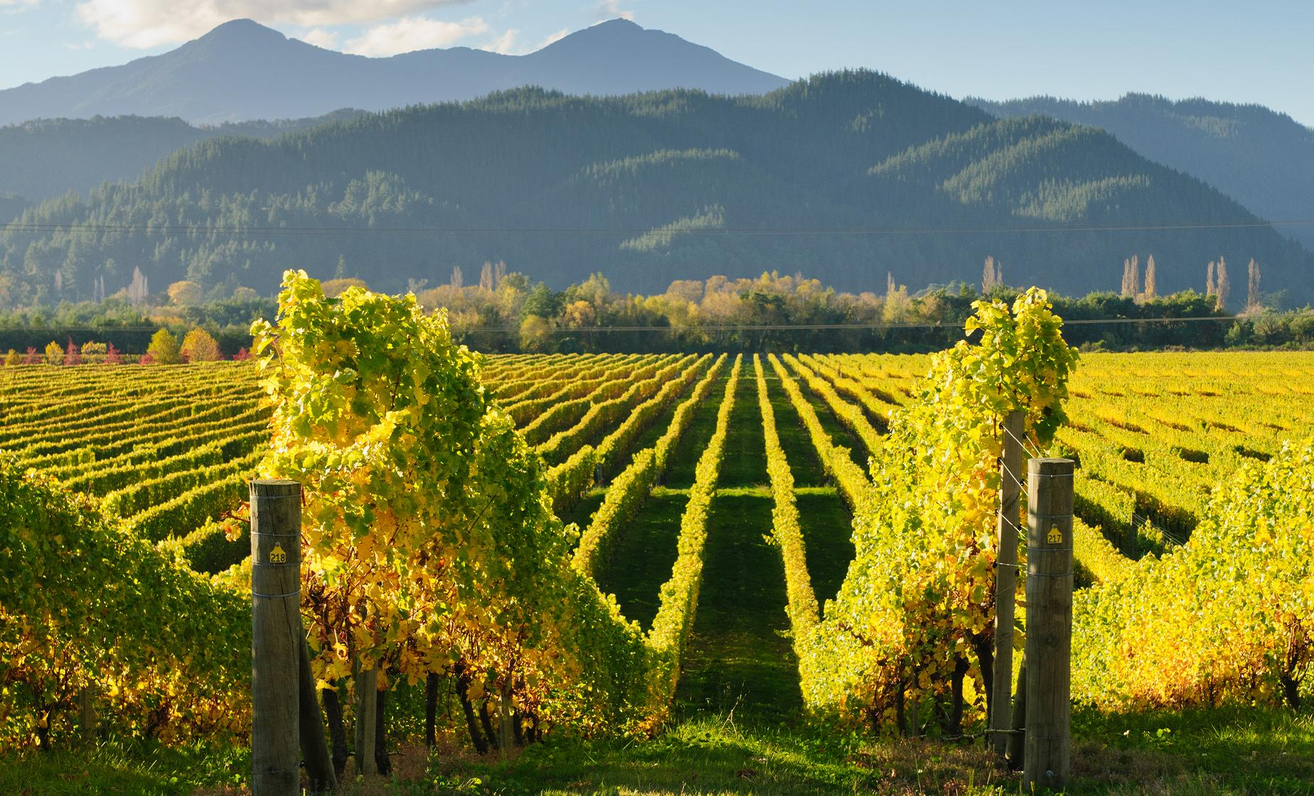 The Wines of Marlborough Tour