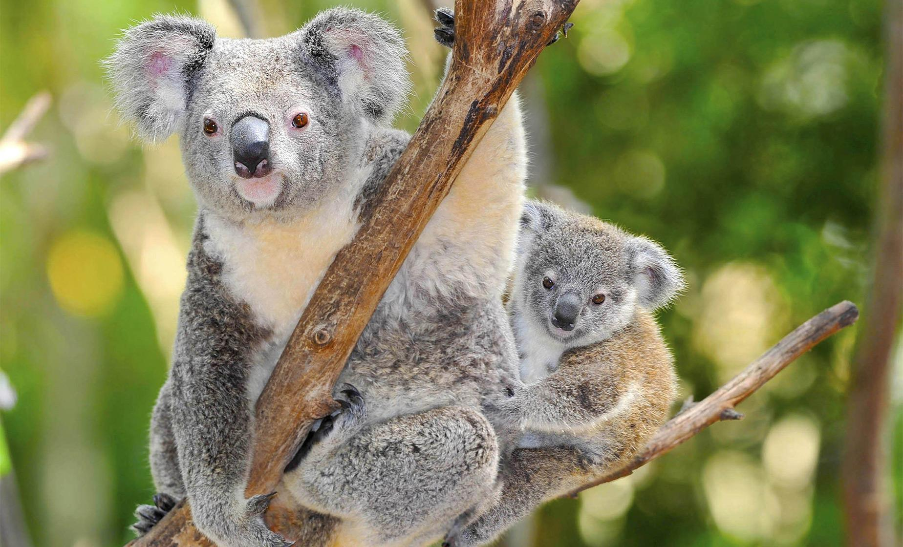 Taronga Zoo Wild Australia Experience