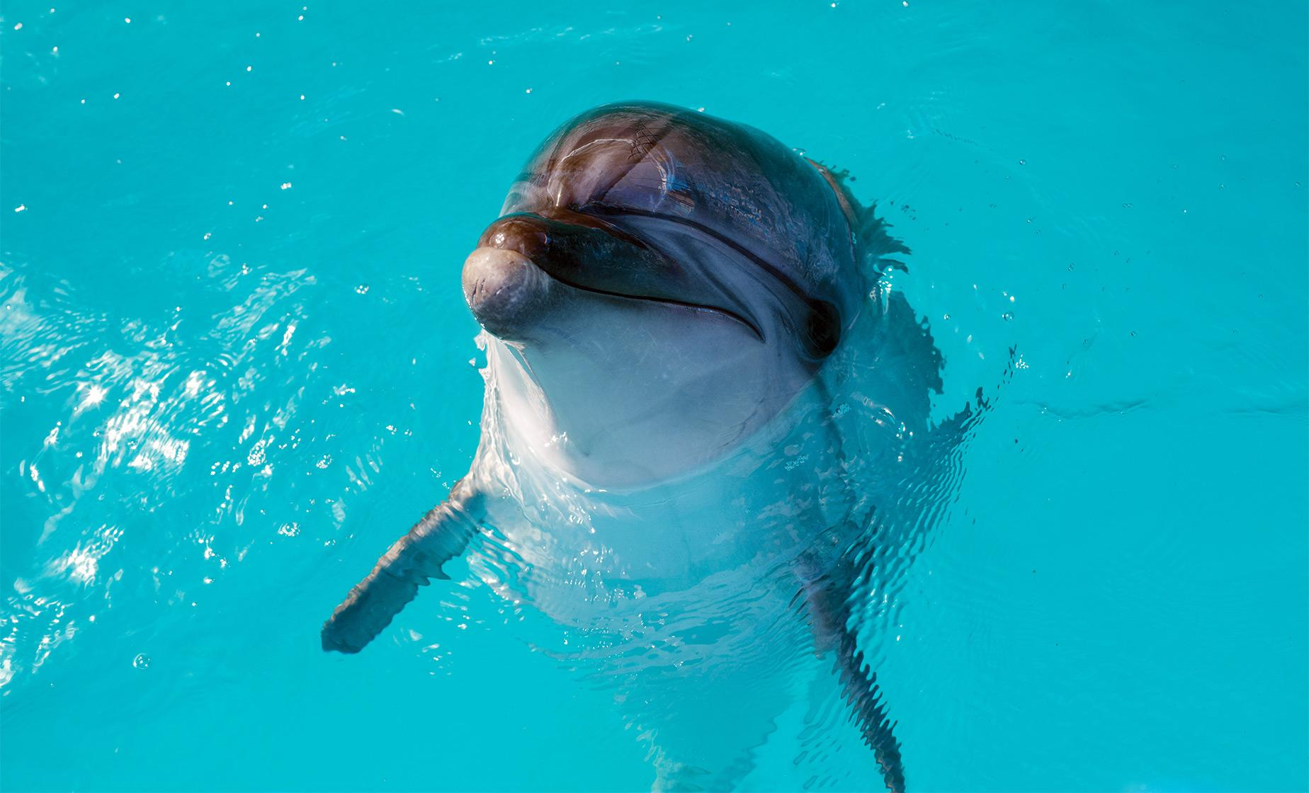 Bermuda Cruise Shore Excursions | Dolphin Discovery