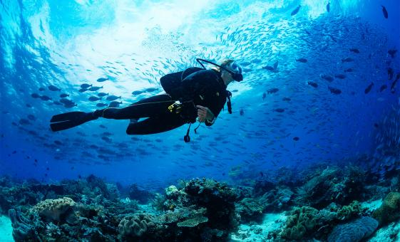 Bermuda Shore Excursions in Kings Wharf | Certified 2-Tank Boat Dive