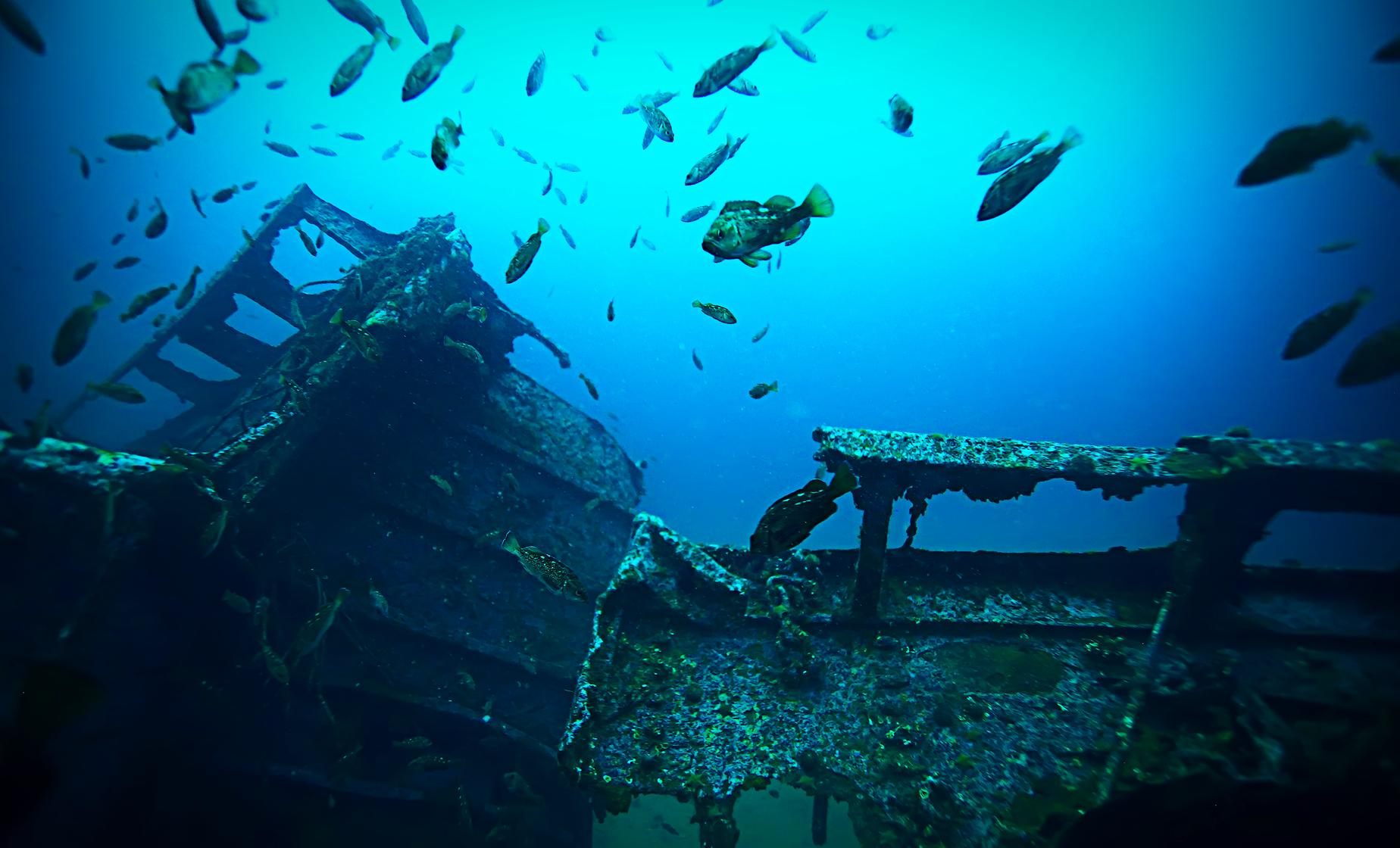 The Antilla Shipwreck Sail and Snorkel Trip in Aruba Palm Beach