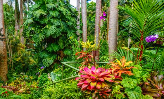Just Bim Barbados Wildlife Landmark Flower Forest Bathsheba St. Nicholas Abbey
