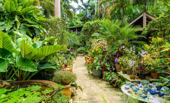 Natural Wonders Day Tour in Barbados Wildlife Plants Flowers Bathsheba East Coast Harrisons Cave