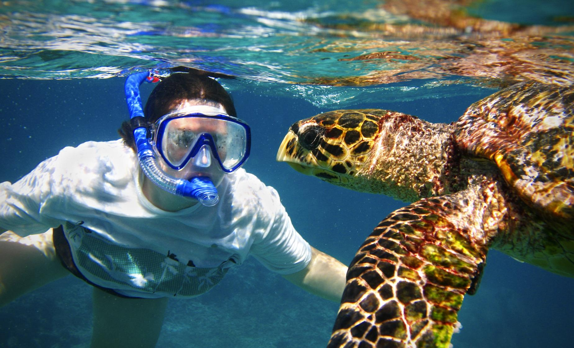 Turtle Snorkel and Beach Break