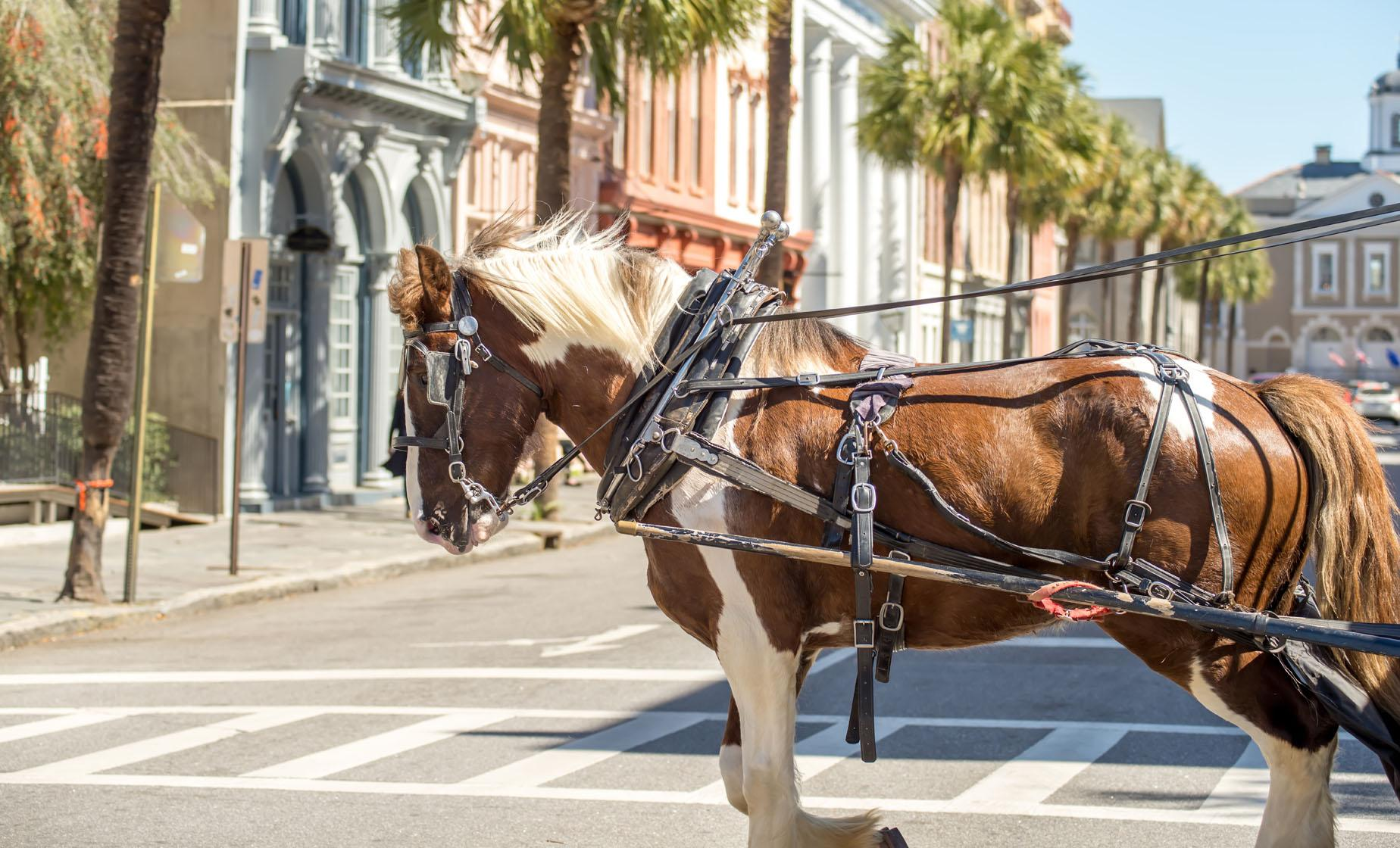 Private Charleston Historic Carriage Ride