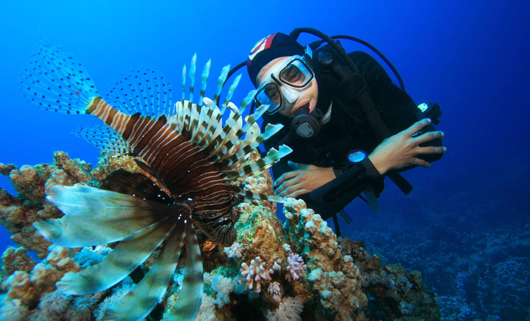 Lion Fish Dive
