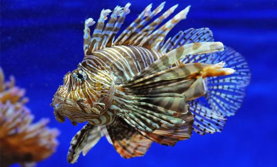 Private Lionfish Expedition Safari Dive