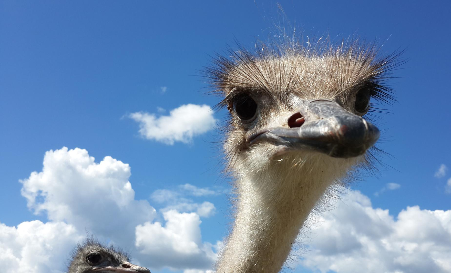 HATO Caves & Jeep Safari Ostrich Farm in Curacao
