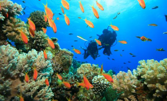 Cozumel Learn to Scuba Dive Shore Trip