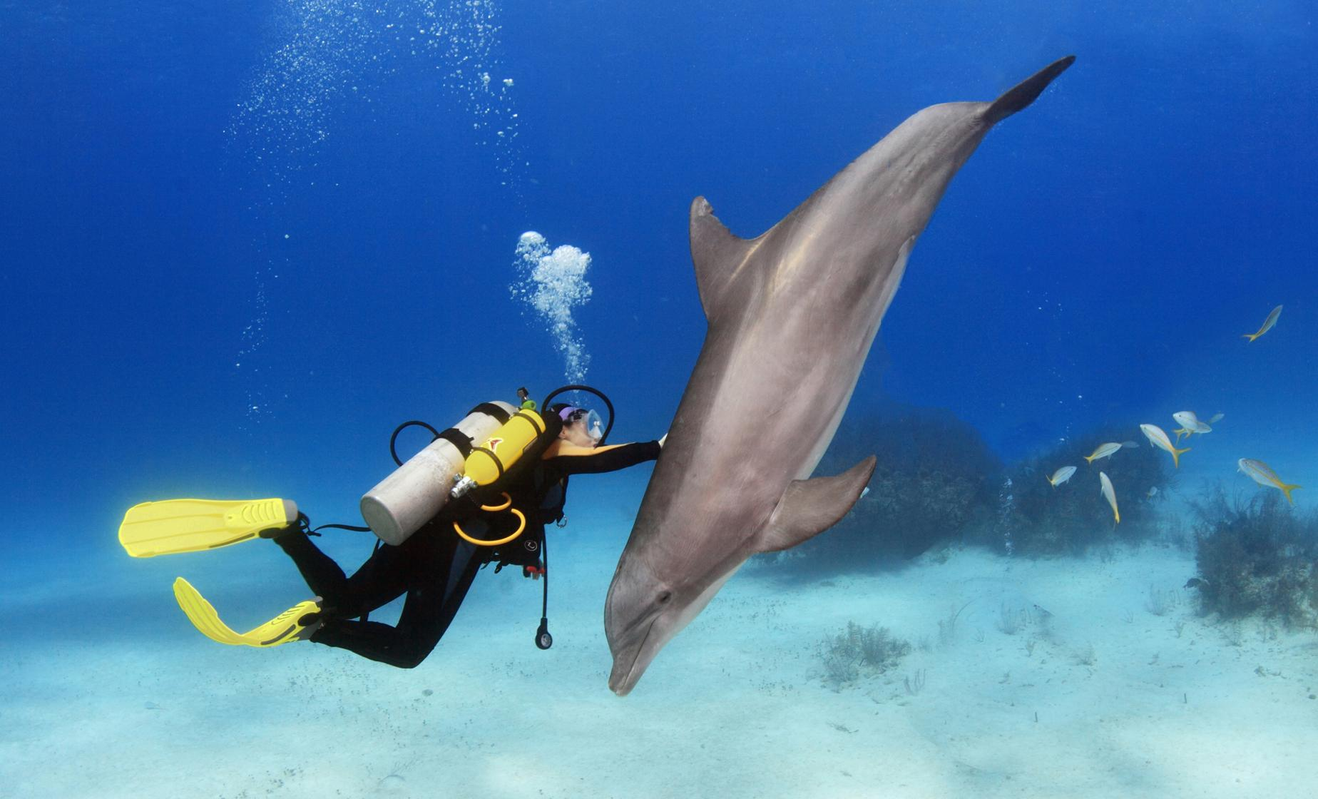 Cozumel Scuba Diving with Dolphins - Cruise Shore Trips
