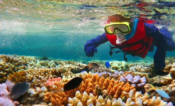 Cozumel Reef Snorkel with Playa Mia | Shore Trip