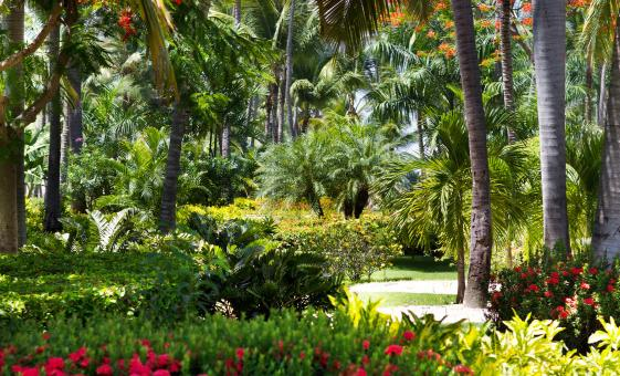 Garden of the Groves and Freeport City Tour Grand Bahama International Bazaar Port Lucaya