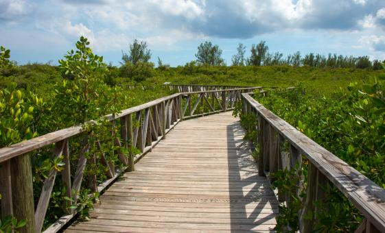 Freeport Cruise Shore Excursions | Lucayan National Park & Cave Tour