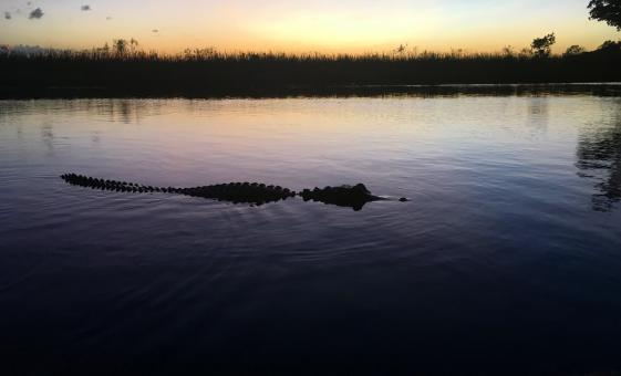 Florida Everglades Evening Airboat Adventure with Wildlife in Fort Lauderdale
