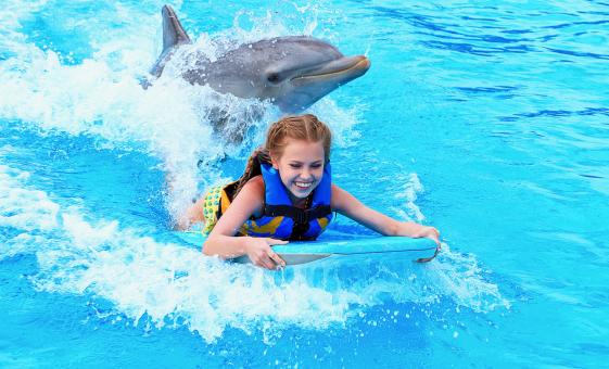 Dolphin Swim in Grand Cayman at Dolphin Park with Turtle Farm Trip